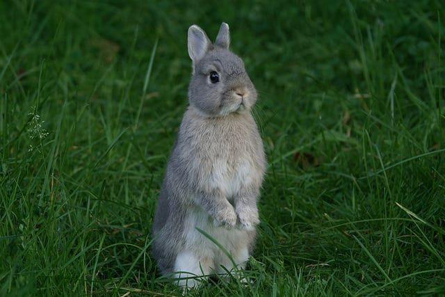 Chinese astrologie Rabbit month